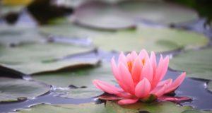 呼吸は潜在意識の入り口で引き寄せにも有効:塩谷式「正心調息法」